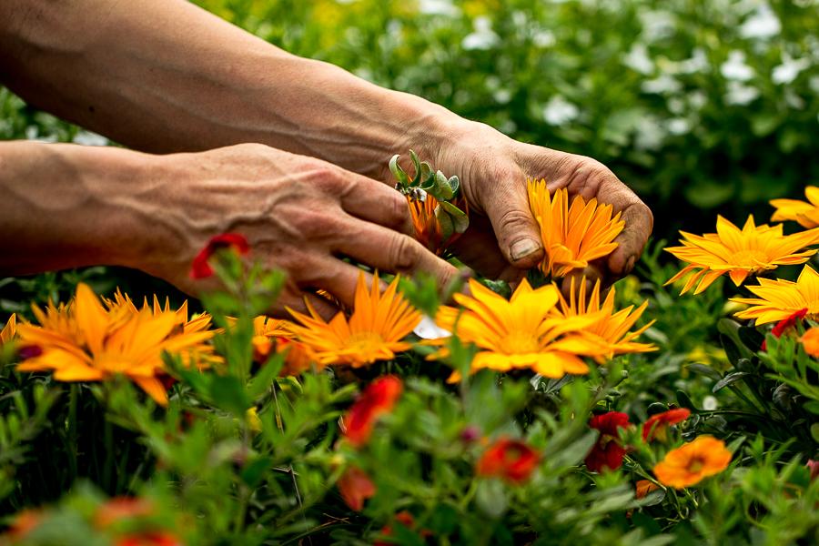 Fotoreportage-Blumenladen