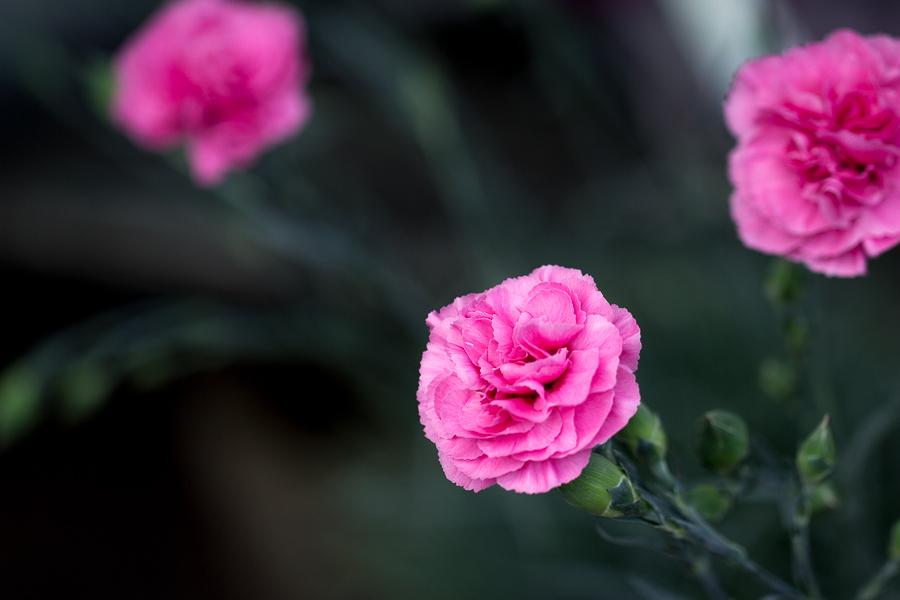 Fotoreportage-Blumenladen-Ranukel