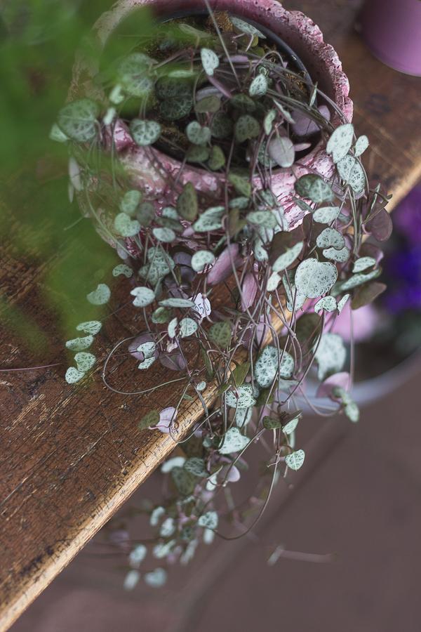 Fotoreportage-Blumenladen-Topfpflanze
