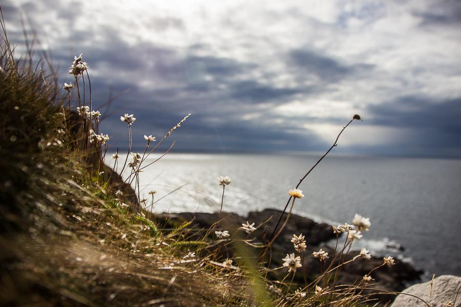 Reisefotografie-Schweden-Blumen