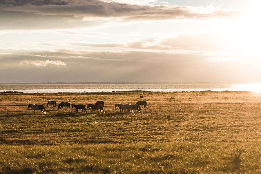 Reisefotografie-Schweden-Pferde